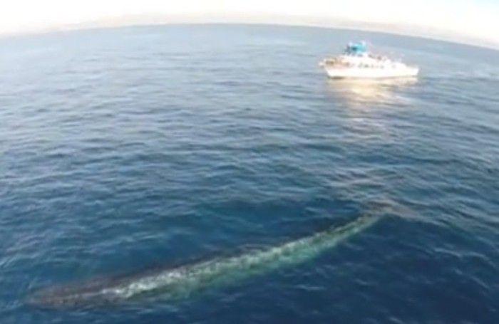 drone-riprende-balena