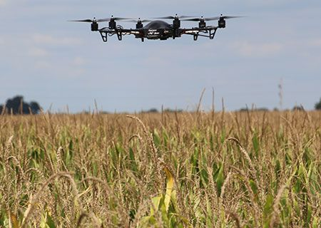 drone-scouting-corn