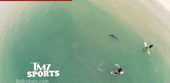 squalo-bianco-ripreso-da-drone