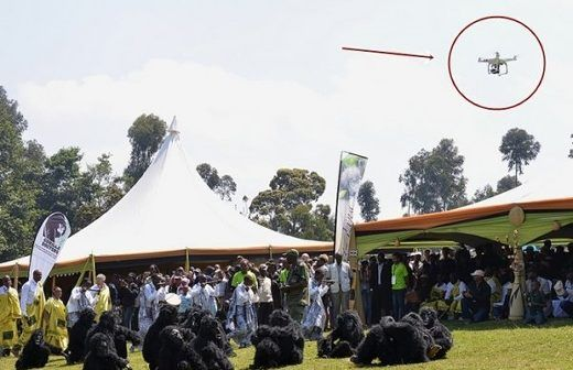m_A-drone-covers-the-Gorilla-naming-ceremony