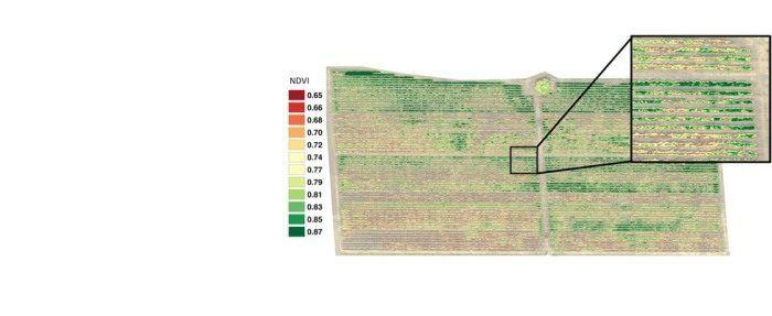 immagine multispettrale per indagine vigore delle piante con i droni