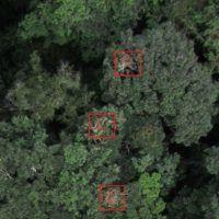 drone-chimp-3