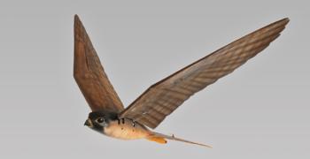 Un drone a