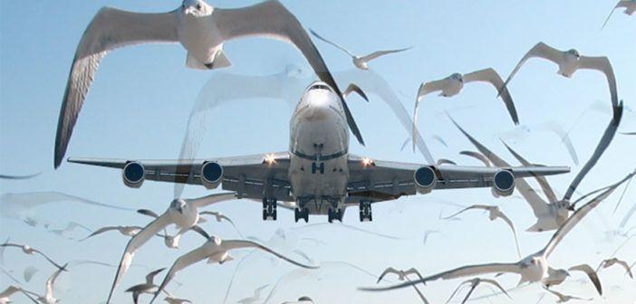 Effetti della collisione con un grosso uccello sul timone di prfondità di un aeroplano