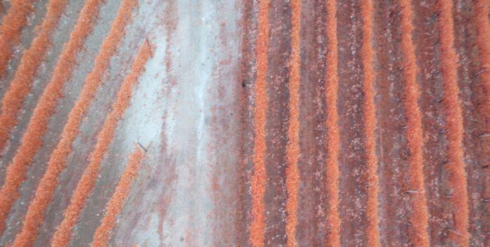 immagine campo prelevata da drone
