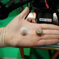 Francesca Pozzi ci mostra le capsule con le uova di Tricogramma per la lotta biologica alla piralide