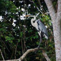 4.Parrot_Amazzonia_EquipeSansMaison_4