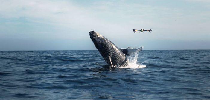 droni nemici delle balene