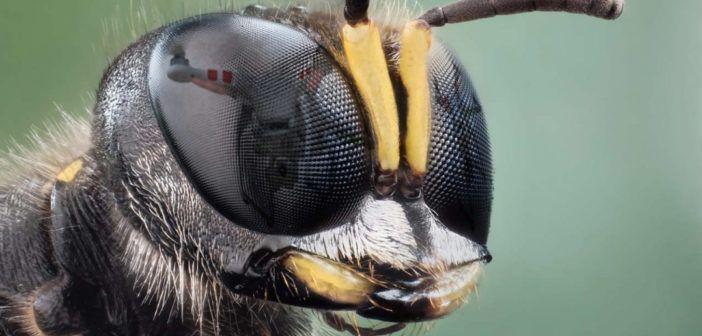 eyebee