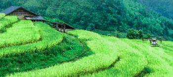Il drone agricolo al lavoro su una risaia:  spesso sono complicate dal punto di vista orografico e richiedono un inseguiento automatico del terreno estremamente preciso.