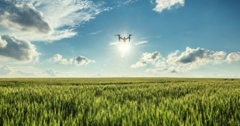 Flying drone and green wheat field