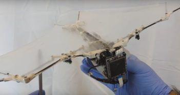 drone-pipistrello