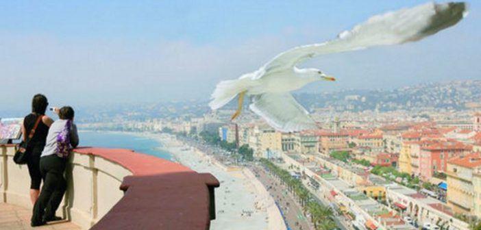 drone sterilizzare gabbiani nizza