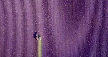 Provence, summer trim - foto International Drone Photography Contest