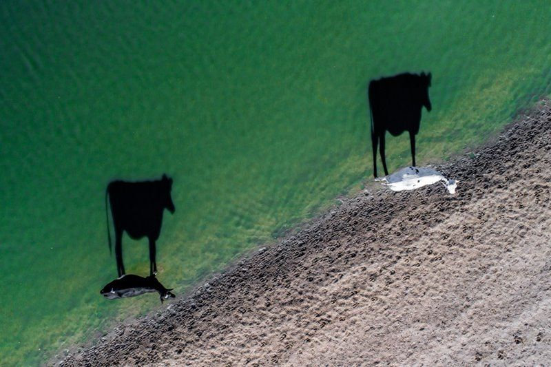 Two moo - foto International Drone Photography Contest