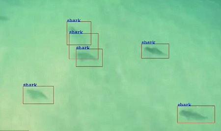 come il drone individua gli squali