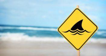 drone contro squali australia