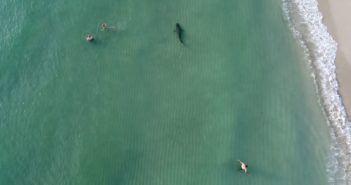 video drone squalo miami beach