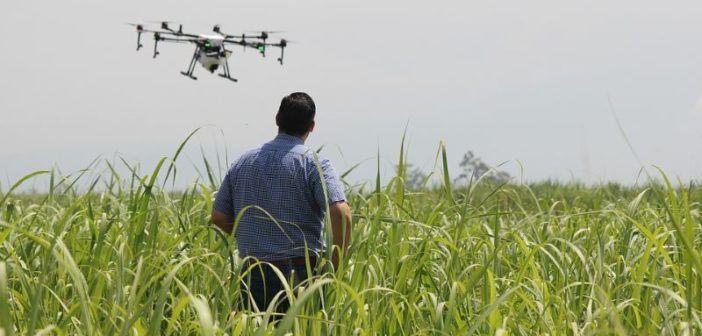 uomo con drone in mezzo a campo agricolo