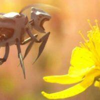 walmart pensa ai droni per impollinare i fiori