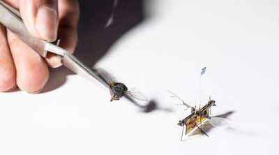 dimensioni robofly