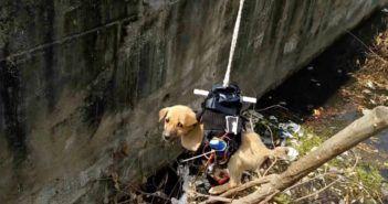 drone salva cane dal canale