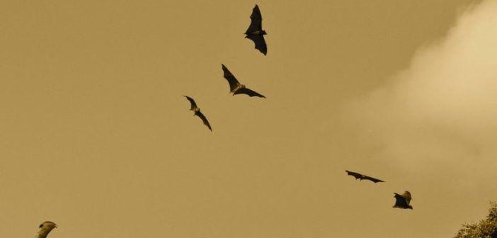 drone ecolocalizzazione come i pipistrelli