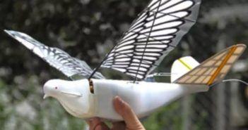 droni uccello spiano i cieli cinesi