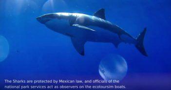 video drone marino finisce nella bocca dello squalo