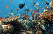 rangerbot drone protegge barriera corallina australia