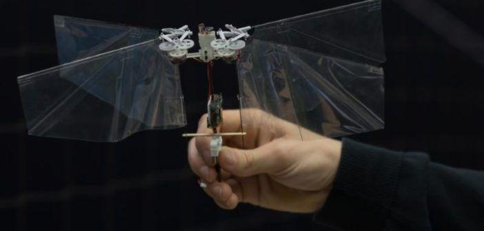 Il drone insetto DelFly ha perso la coda, ma non la voglia di volare