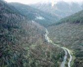 Drone riprende i boschi devastati dal vento sulle Dolomiti [VIDEO]