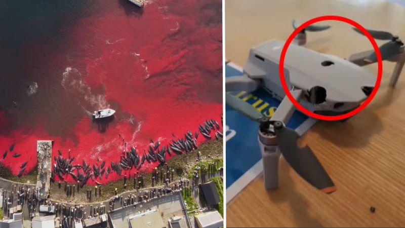 Fær Øer: drone colpito da arma da fuoco mentre riprende la mattanza dei globicefali [VIDEO]